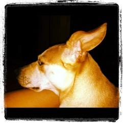 Dali's ears