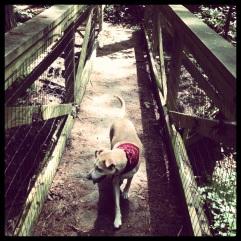 Hiking with Dali