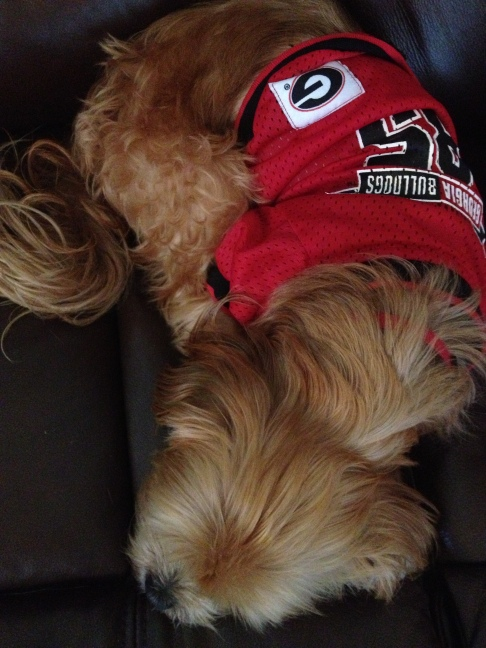 Chewie sleeping after the race