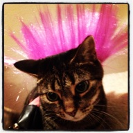 Kitty Punk Rocker